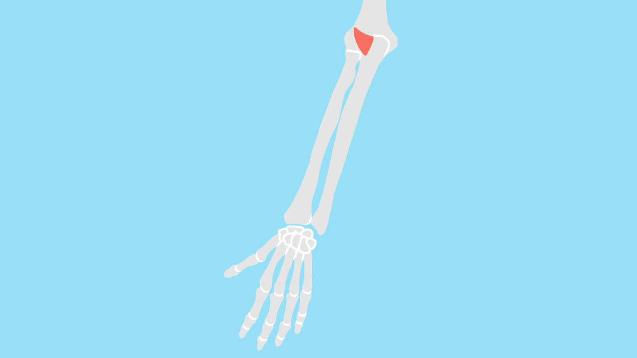 肘筋(ちゅうきん)