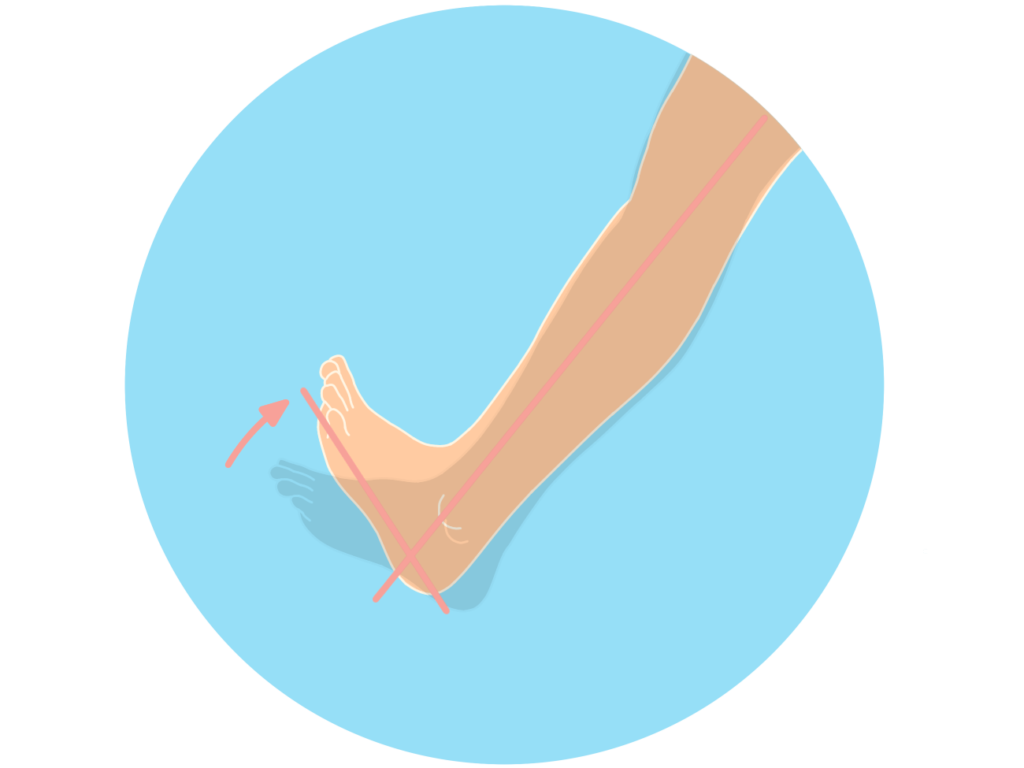 足首を曲げる動作(足関節の背屈)