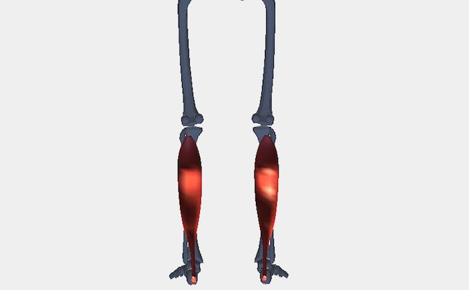 ふくらはぎの筋肉(ヒラメ筋)