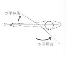 肩関節の水平伸展