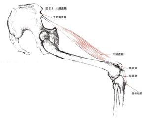 大腿四頭筋のストレッチと筋線維の伸びる方向