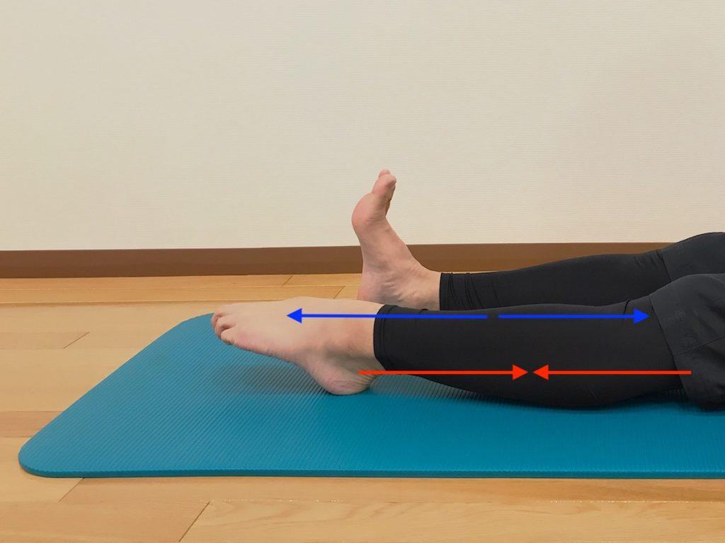 底屈動作の際の筋収縮