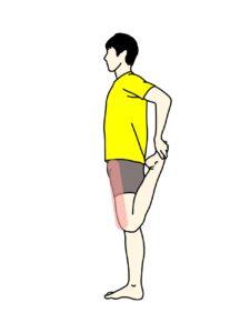 もも前(大腿四頭筋)のストレッチで伸びる場所