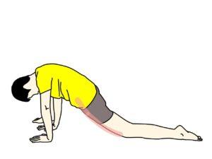 骨盤前〜もも前(腸腰筋・大腿直筋)のストレッチで伸びる場所
