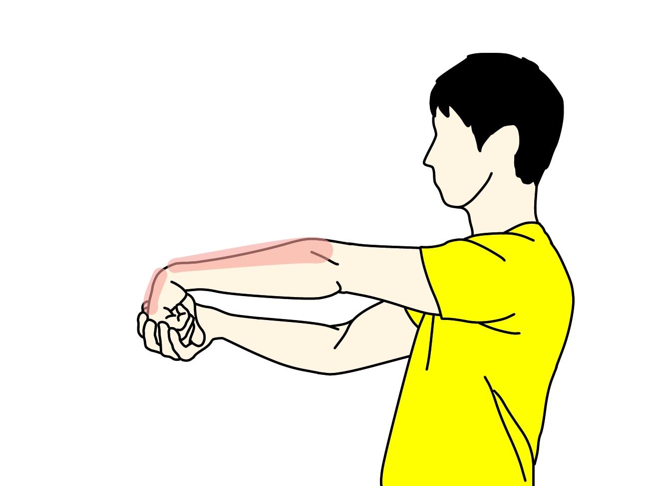 手の甲〜腕の筋肉(前腕伸筋群)のストレッチで伸びる場所