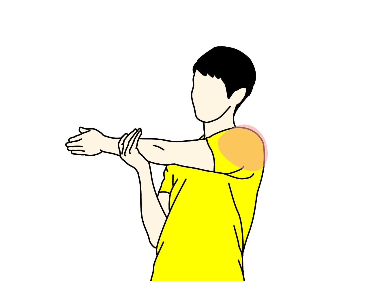 肩の筋肉(三角筋後部)のストレッチで伸びる場所