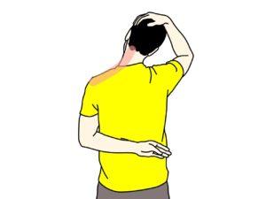 首〜肩の筋肉(僧帽筋上部)のストレッチで伸びる場所