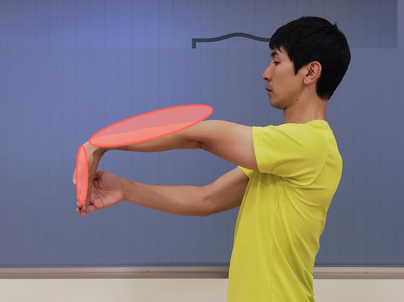 手の平〜腕のストレッチで伸びる部位