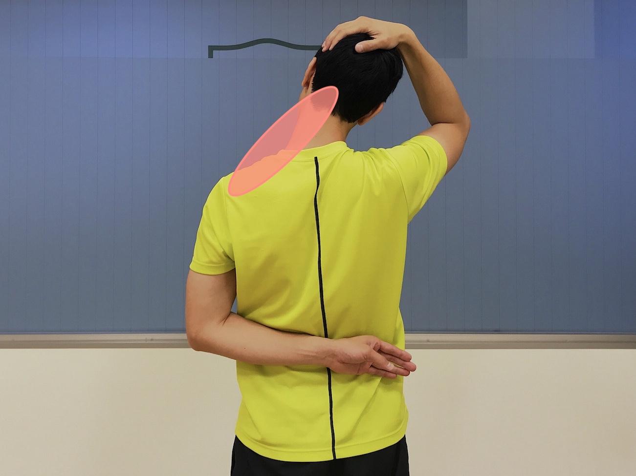 首〜肩の筋肉(僧帽筋上部)のストレッチで伸びる部位