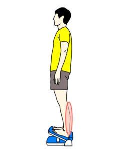 ストレッチボードを使ったのふくらはぎの筋肉(下腿三頭筋)のストレッチで伸びる場所