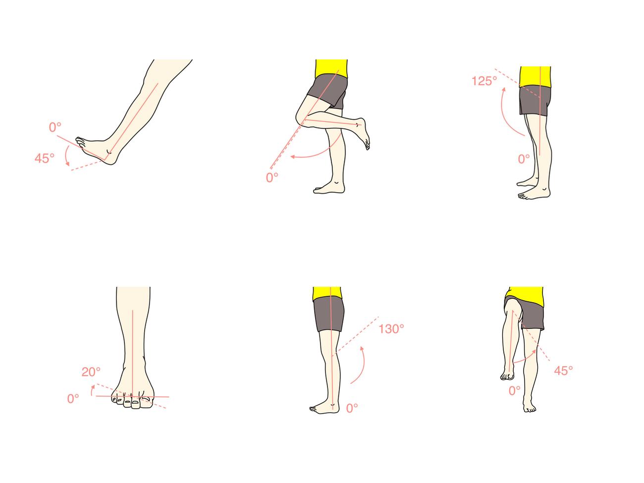 下肢の関節(足関節・膝関節・股関節)の関節可動域(ROM)と働く筋肉
