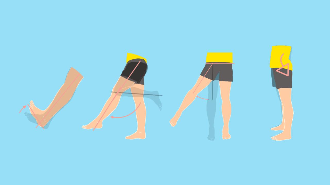 下肢の関節の関節可動域(ROM)と働く筋肉