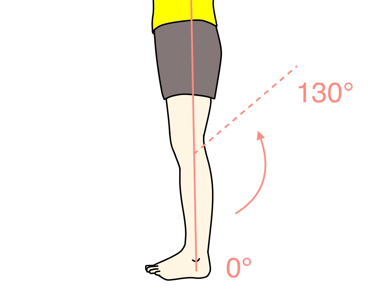 膝を曲げる動作(膝関節の屈曲)の関節可動域(ROM)と働く筋肉のまとめ