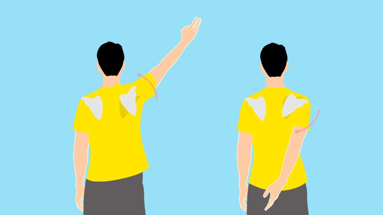 肩甲骨の上方回旋と下方回旋