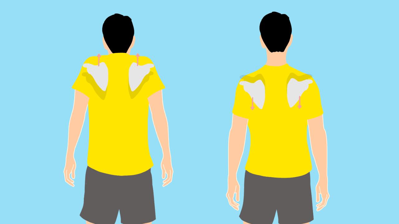 肩甲骨の挙上と下制