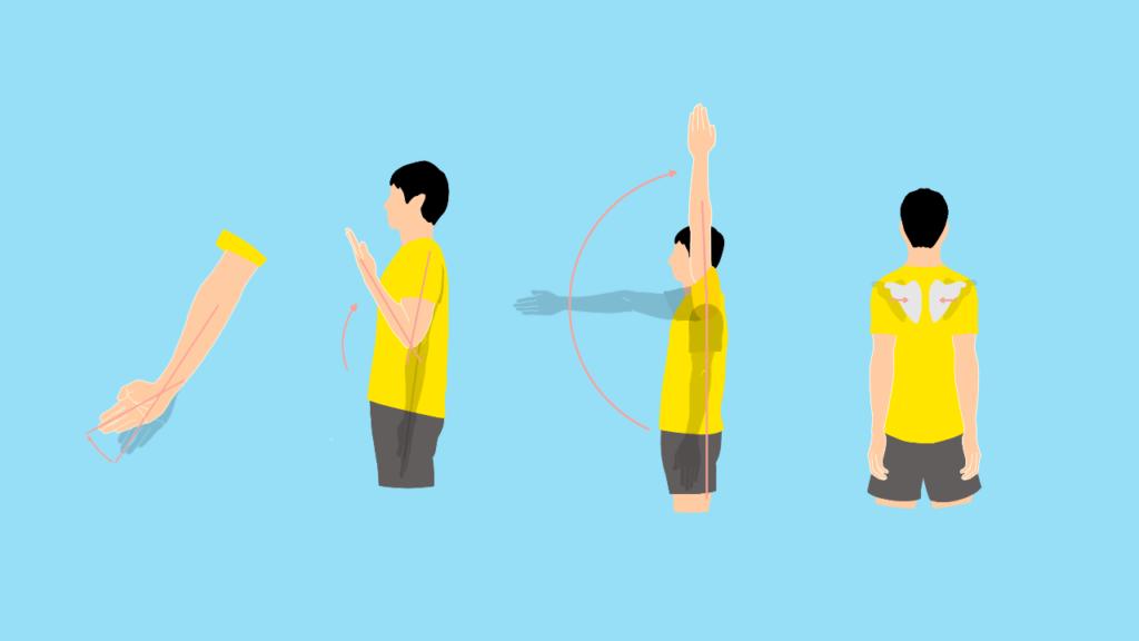 上肢の関節の動作に作用する筋肉と関節可動域(ROM)