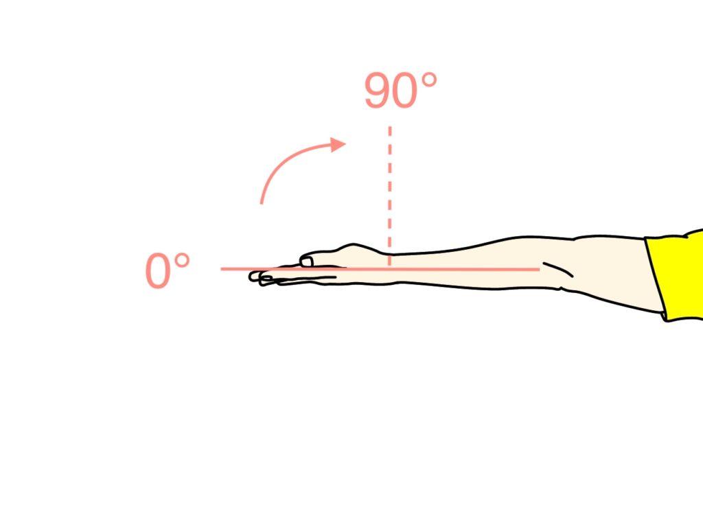 手首を曲げる動作(手首の屈曲)に作用する筋肉と関節可動域(ROM)のまとめ