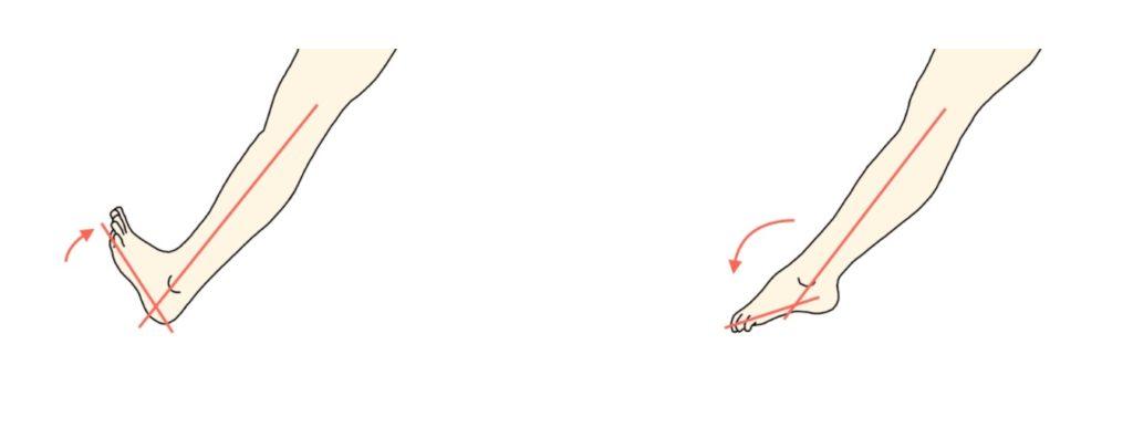 足関節の背屈と底屈