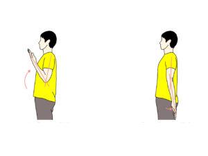肘関節の屈曲と伸展の拮抗筋
