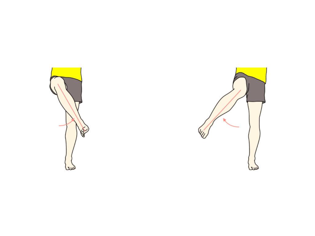 股関節の外旋と内旋の拮抗筋
