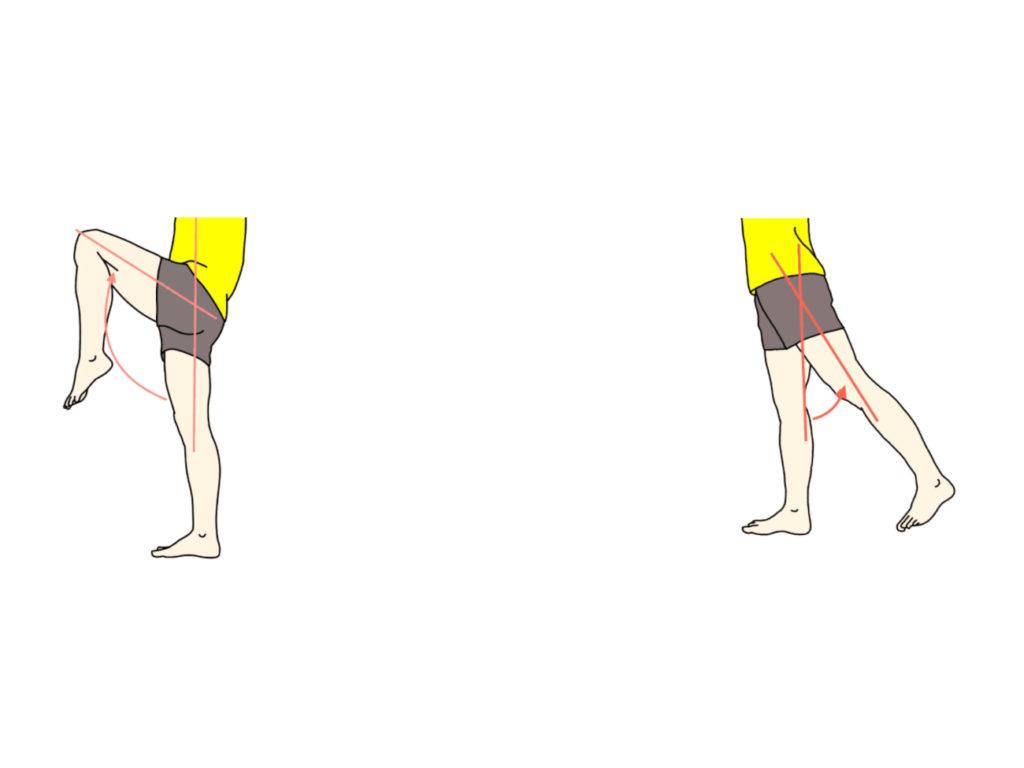 股関節の屈曲と伸展の拮抗筋