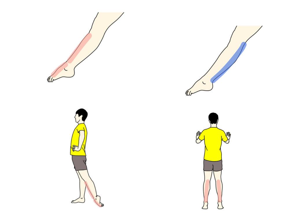足首を伸ばす動作(底屈)を柔らかくするためのストレッチとトレーニング
