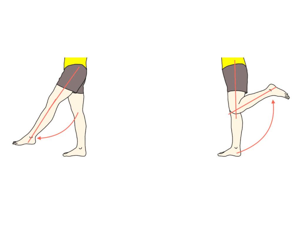 膝関節の屈曲と伸展の拮抗筋