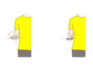 前腕(橈尺関節)の回外と回内の拮抗筋