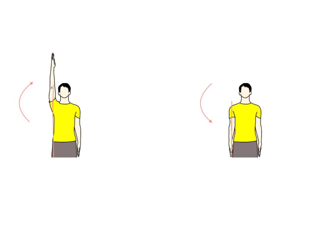 肩関節の外転と内転の拮抗筋