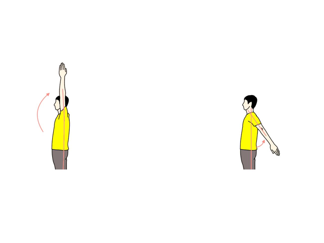 肩関節の屈曲と伸展の拮抗筋