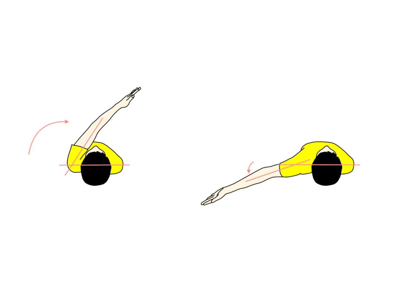 上肢の動作の拮抗筋