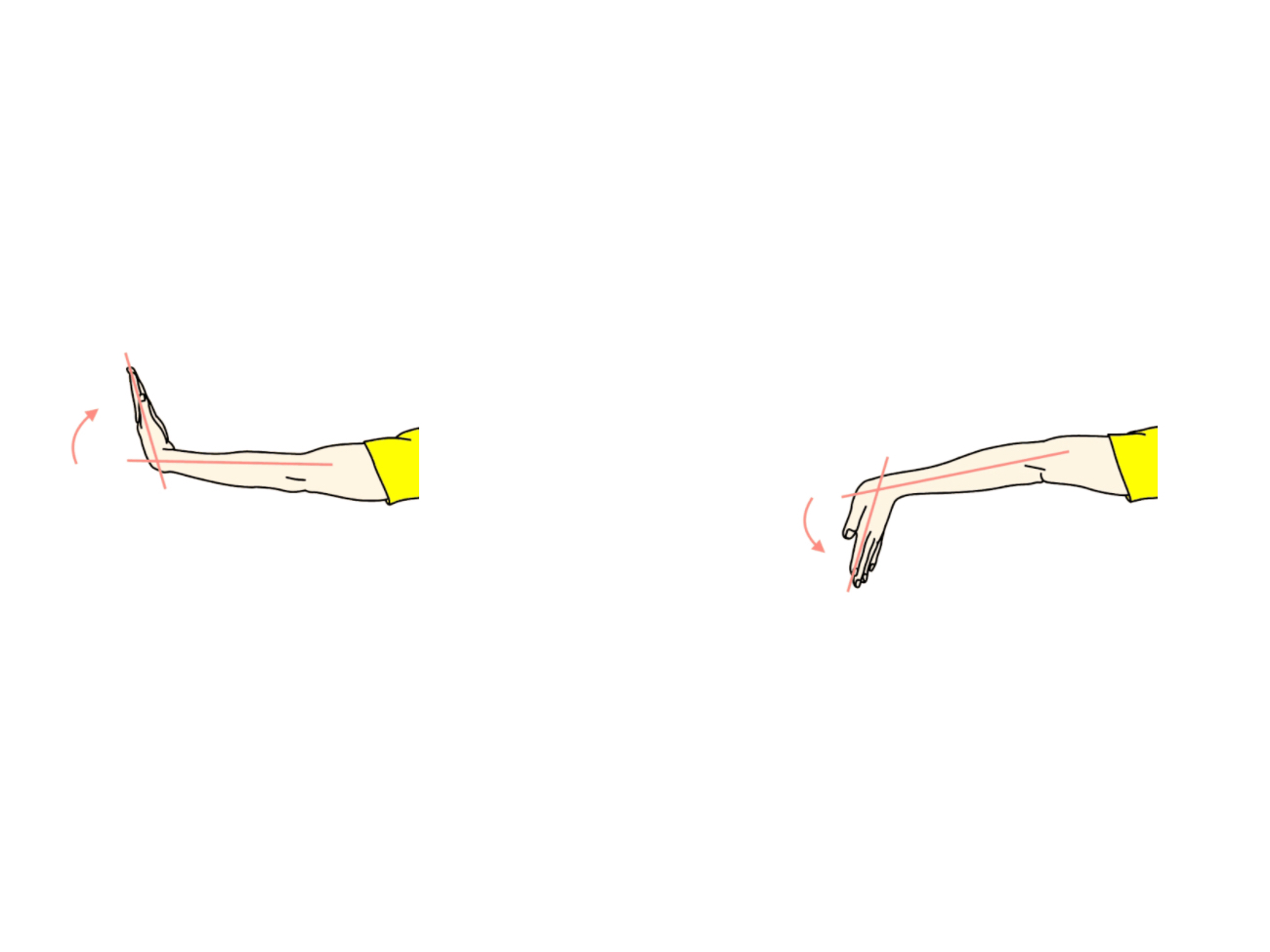 手関節の屈曲と伸展の拮抗筋