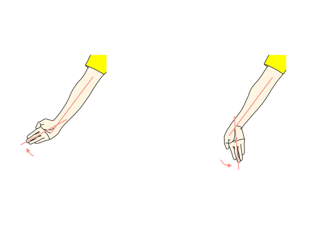 手関節の橈屈と尺屈の拮抗筋