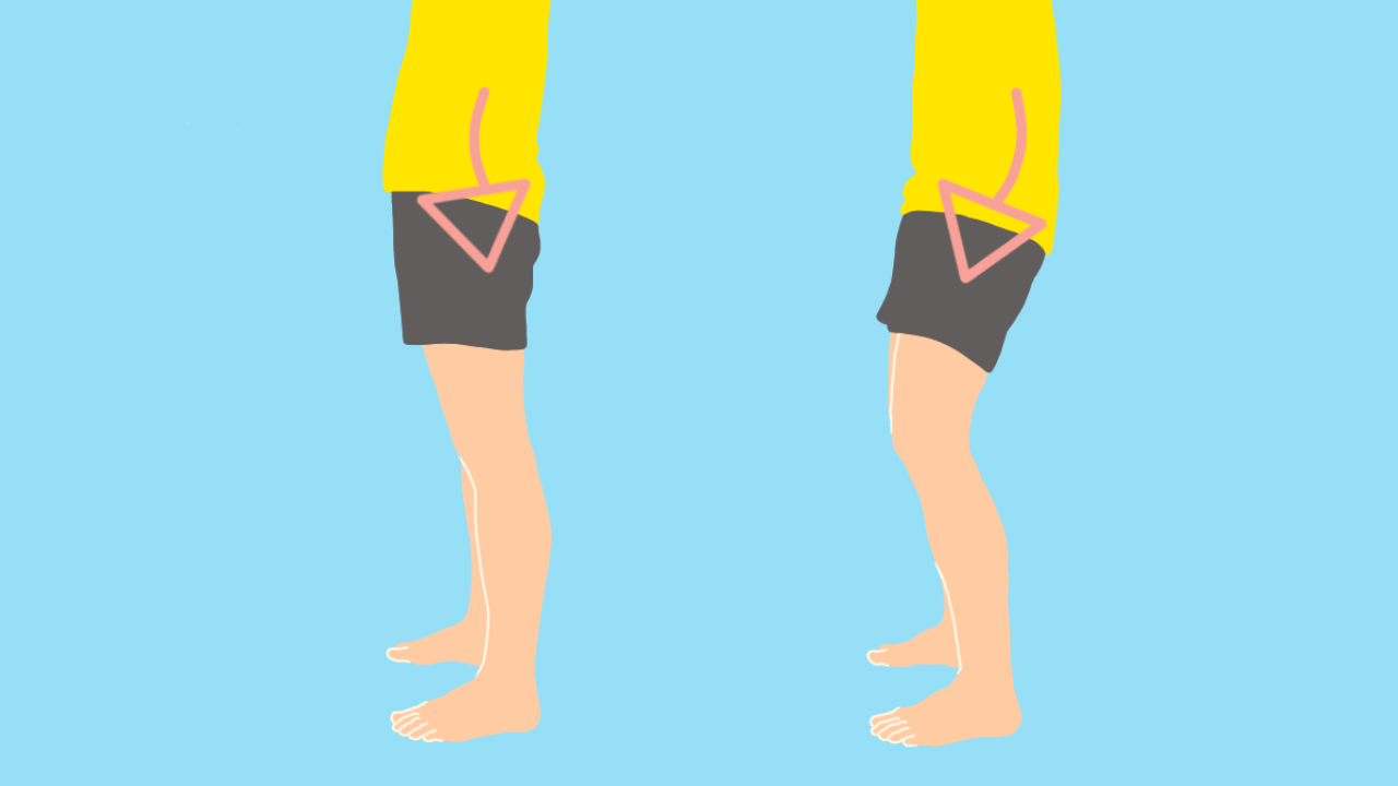 骨盤の後傾に作用する筋肉