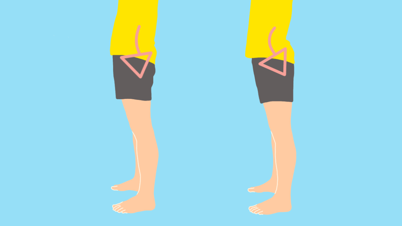 骨盤の前傾に作用する筋肉
