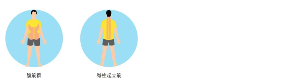 寝ながらできる体幹トレーニングで意識する筋肉