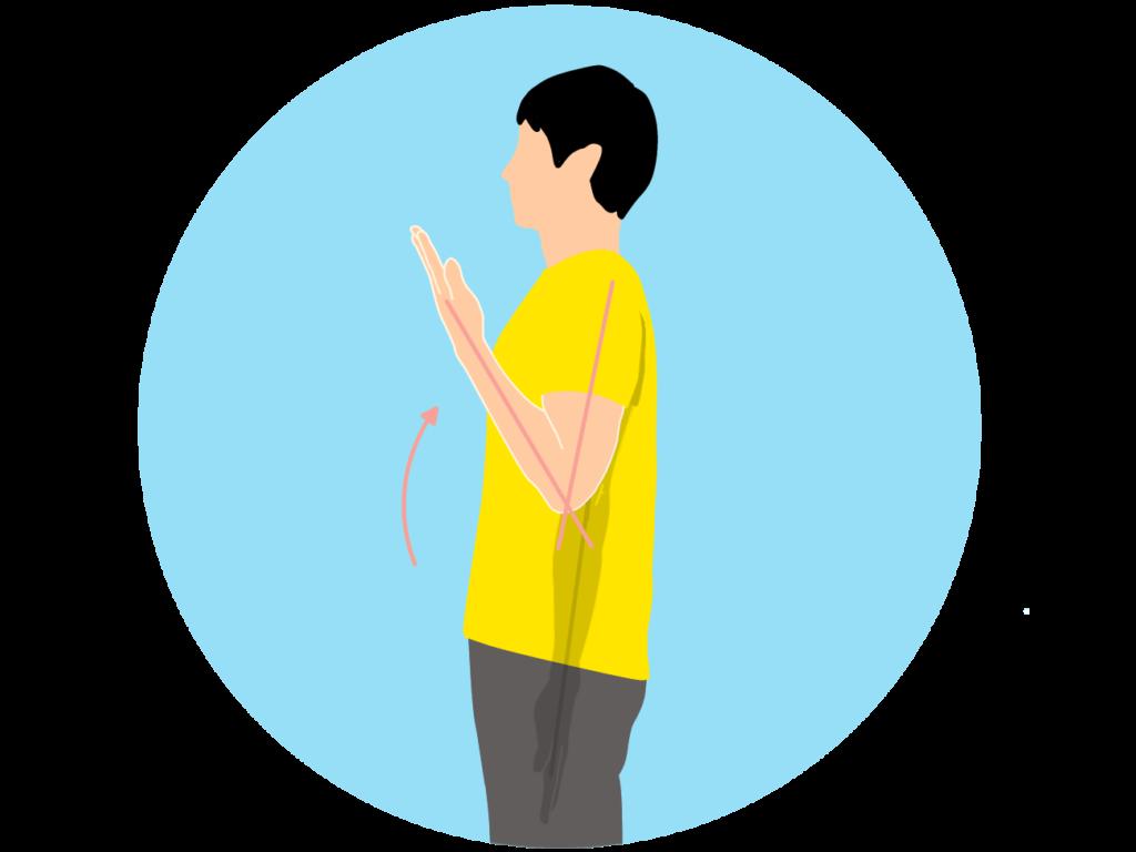 肘を曲げる動作(肘関節の屈曲)