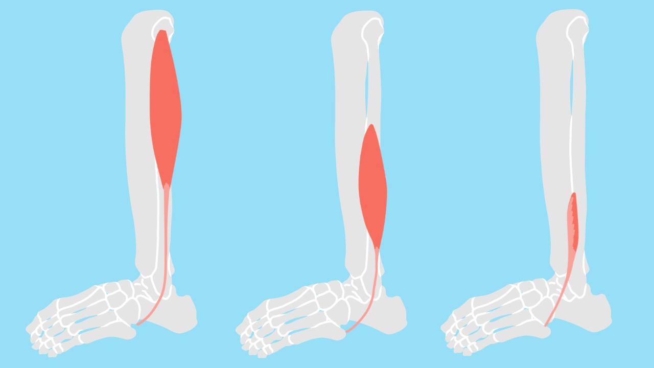 足首〜スネの外側の筋肉