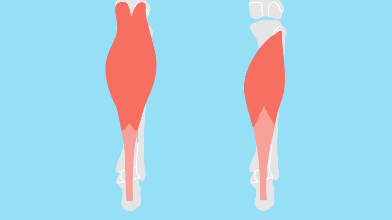 足首〜ふくらはぎの筋肉