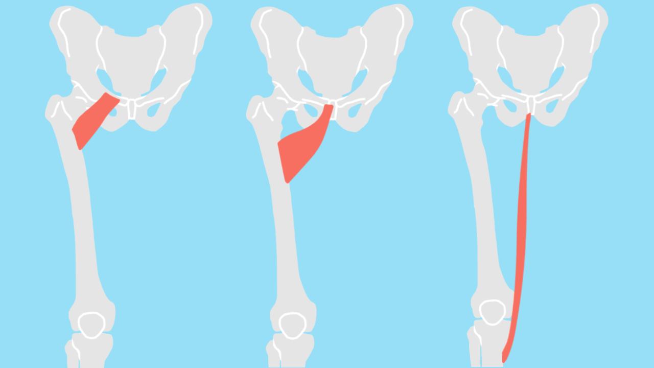 太腿内側の筋肉