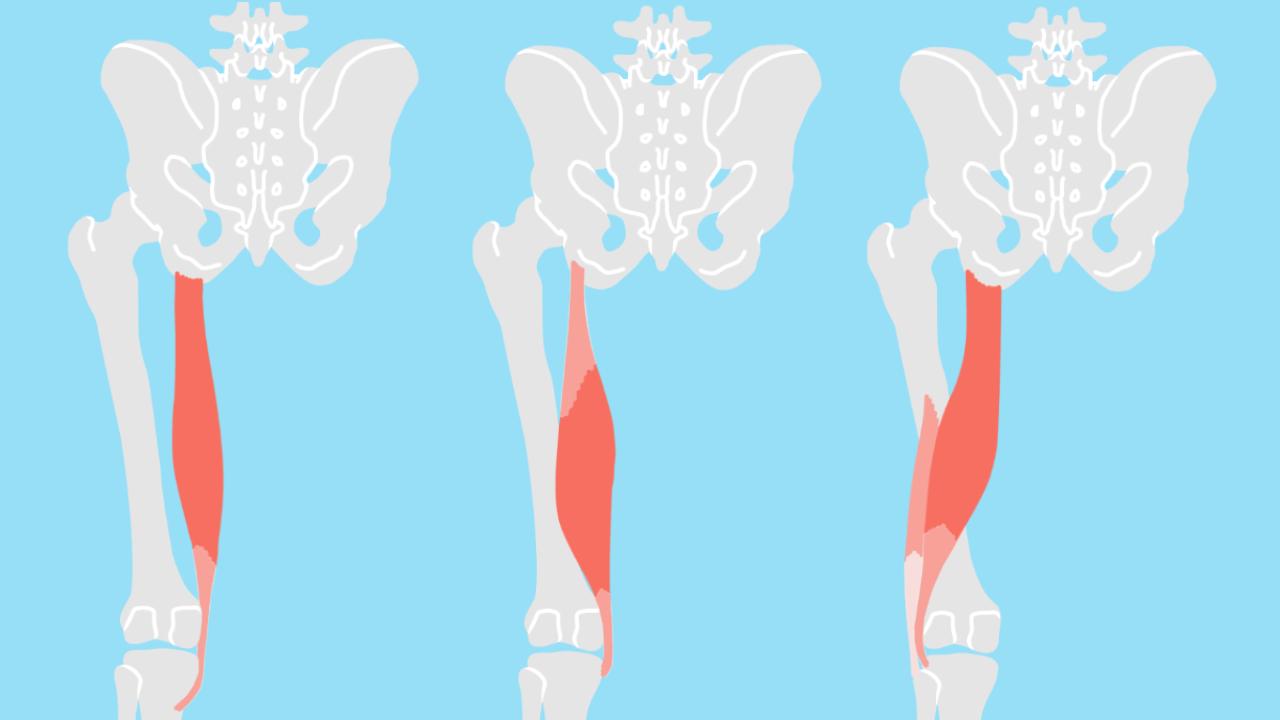 太腿後面の筋肉